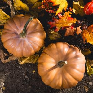 Westover Capital Advisors - Thanksgiving